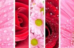 Mooie bloemenachtergrond Royalty-vrije Stock Afbeeldingen