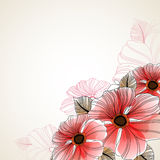 Mooie bloemenachtergrond van anemoon Stock Foto