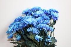 mooie bloemenbloemen van juffrouw Royalty-vrije Stock Afbeeldingen