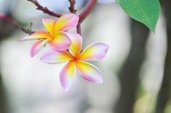 Mooie bloemenbloesem in de lente Royalty-vrije Stock Fotografie