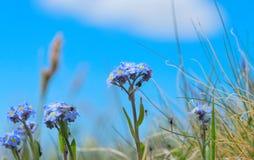 Mooie bloemenvergeet-mij-nietjes royalty-vrije stock fotografie