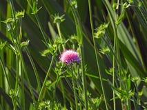 Mooie mooie bloeminstallatie die de bloemblaadjes van de zonlichttuin vangen stock foto