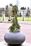 Mooie bloempotten Stock Afbeelding
