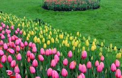 Mooie bloemtuin met heldere roze en gele die tulpen in weelderige groen van tuin worden geplooid stock foto