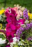 mooie boeketten van bloemen en kruiden Royalty-vrije Stock Afbeelding