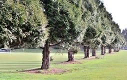Mooie bomen Stock Afbeelding