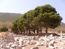 Mooie bomen Stock Afbeeldingen