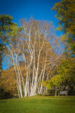 Mooie bomen Stock Fotografie