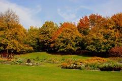 Mooie bomen in de herfst Stock Afbeeldingen