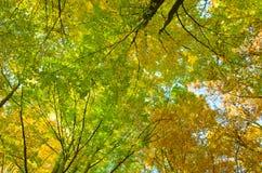 Mooie bomen in de herfst Royalty-vrije Stock Afbeelding