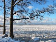 Mooie bomen dichtbij Curonian-Spit in de winter, Litouwen Royalty-vrije Stock Foto