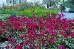 Mooie bomen en bloemen Stock Foto