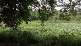 Mooie bomen en groenliefde aan horloge voor ogen Royalty-vrije Stock Foto