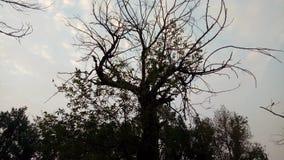 Mooie bomen en groenliefde aan horloge voor ogen Stock Foto's