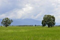 Mooie bomen in het midden van de gebieden royalty-vrije stock foto's