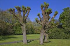 Mooie bomen in het midden van een park Royalty-vrije Stock Afbeeldingen