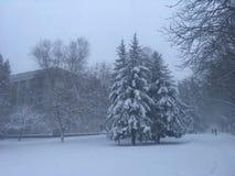Mooie bomen onder sneeuw in park Openluchtlandschapsfotografie De aard van de winter royalty-vrije stock foto
