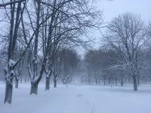 Mooie bomen onder sneeuw in park Openluchtlandschapsfotografie De winteraard in daglicht royalty-vrije stock foto's