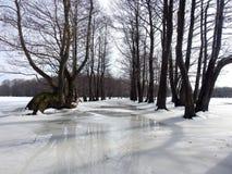 Mooie bomen op het gebied van de de lentevloed, Litouwen stock foto