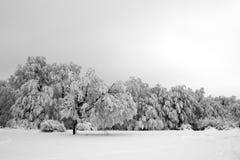 Mooie bomen in wintertijd Stock Foto's