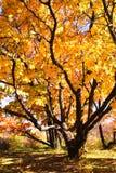 Mooie boom Stock Afbeeldingen