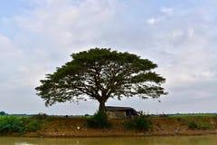Mooie boom in Cambodjaans platteland royalty-vrije stock foto