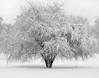 Mooie boom die met sneeuw wordt behandeld royalty-vrije stock afbeelding
