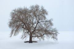 Mooie boom in een sneeuwlandschap, Harbin, China royalty-vrije stock afbeelding