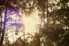 Mooie boom in het het grasgebied en zonlicht onder zijn takken en bladeren De ZOMERlandschap Stock Foto's