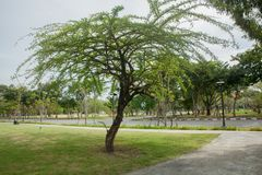 Mooie boom in het park Royalty-vrije Stock Afbeeldingen