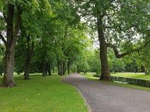 Mooie boom in het park royalty-vrije stock fotografie