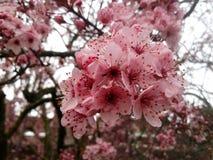 Mooie boom met bloemen op hemelachtergrond Stock Foto's