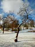 Mooie boom onderaan de straat van mijn huis Stock Afbeeldingen