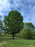 Mooie boom op een aardige bewolkte dag Stock Foto
