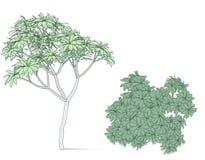 Mooie boom op een witte achtergrond Royalty-vrije Stock Foto