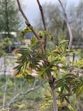 Mooie boombladeren op het Park stock afbeeldingen