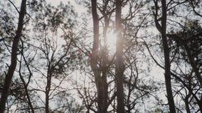 Mooie boomtakken tegen de blauwe hemel stock footage