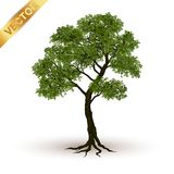 Mooie boomvector op een witte achtergrond Stock Foto