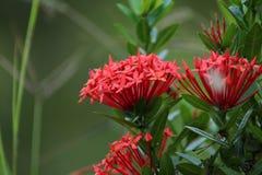 Mooie bos van bloemenbehang stock afbeeldingen