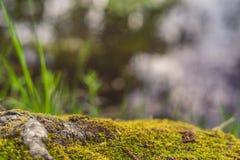 Mooie bosachtergrond Forest Floor Mos Boom avobe allen stock foto's
