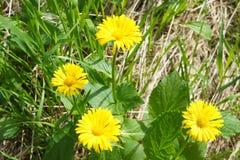 Mooie bosbloemen in Siberische taiga Khakassia royalty-vrije stock foto