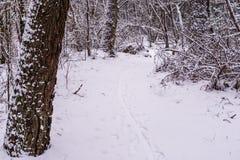 Mooie bosdieweg in witte sneeuw, wintertijd in het hout wordt behandeld, Nederlands boslandschap royalty-vrije stock foto