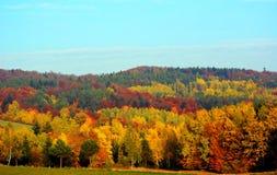 Mooie bossen in de PrzÄ… dkireserve in podkarpacie-Polen stock afbeelding