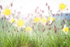 Mooie bossen van gele narcissen royalty-vrije stock afbeeldingen