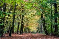 Mooie bosweg in de herfst stock foto's