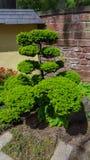 Mooie botanische tuin in Duitsland royalty-vrije stock afbeelding