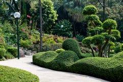 Groene tuin Stock Foto