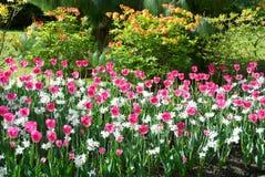Mooie botanische tuin met tulpen Stock Afbeelding