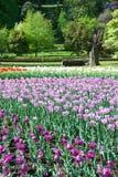 Mooie botanische tuin met tulpen Royalty-vrije Stock Afbeelding