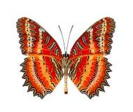 Mooie boter, Rode Lacewing onder vleugels in natuurlijk kleurenprof. Royalty-vrije Stock Afbeeldingen